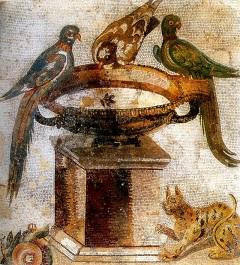 Pompei 44