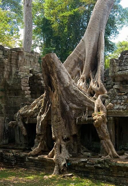 Preah Khan 21