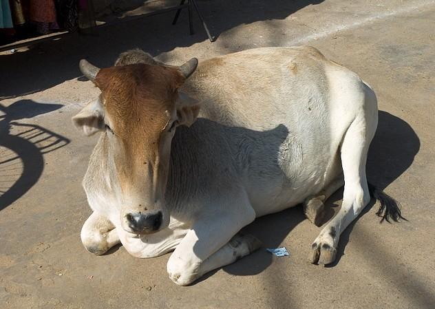 Pushkar 20