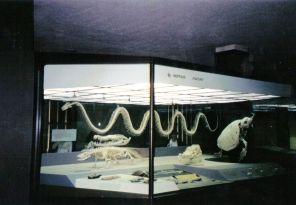 Skelet van een python, komodovaraan en een krokodil
