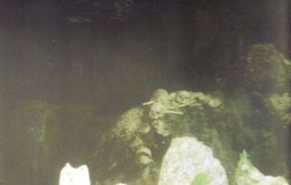 Tana Toraja 10 (grotgraven)