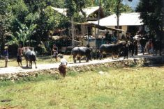 Tana Toraja 38 (begrafenisceremonie)