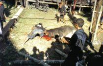 Tana Toraja 44 (begrafenisceremonie)