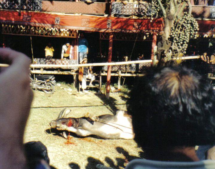 Tana Toraja 45 (begrafenisceremonie)