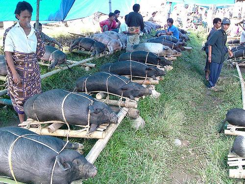 Tana Toraja 50 (begrafenisceremonie)