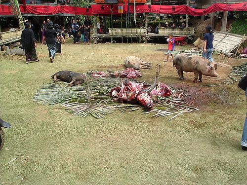 Tana Toraja 51 (begrafenisceremonie)