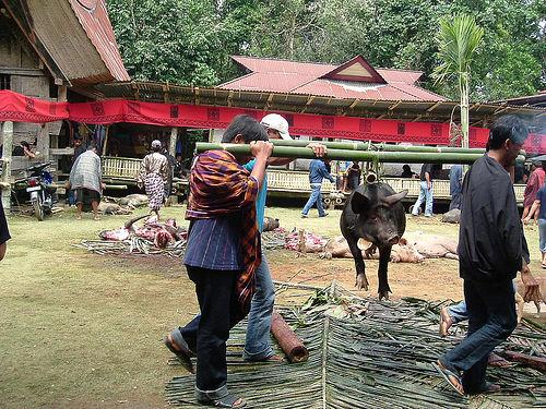 Tana Toraja 53 (begrafenisceremonie)