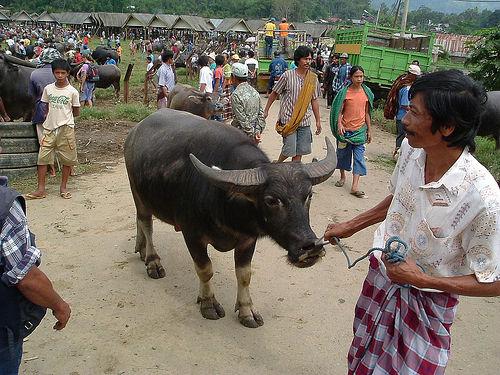 Tana Toraja 54 (begrafenisceremonie)