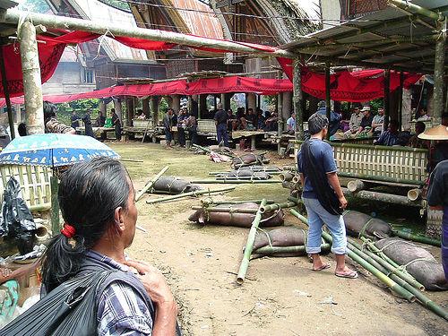 Tana Toraja 55 (begrafenisceremonie)