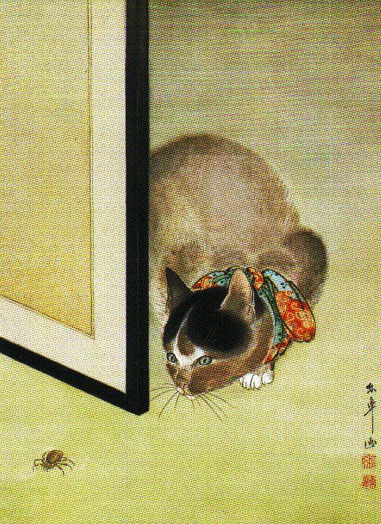 Tókó - Kat en spin