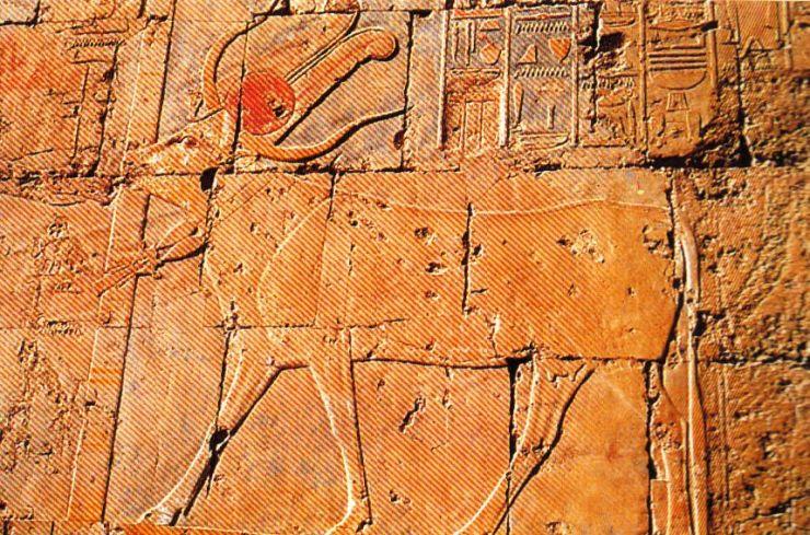Tempel van Hatsjepsoet 19