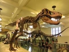 Tyrannosaurus rex 03