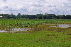 Anuradhapura (2)