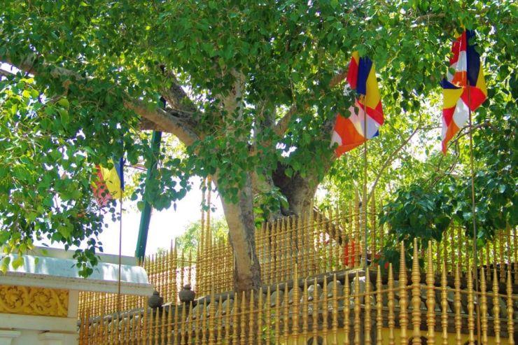 Anuradhapura (5)