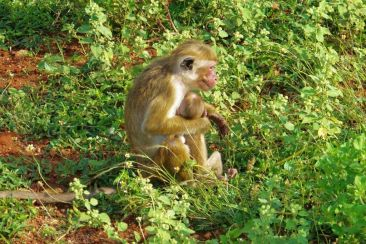 Anuradhapura (54)