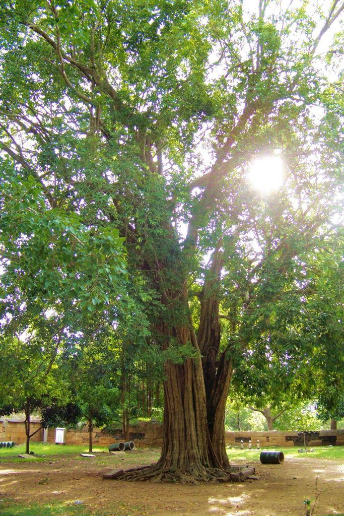 Anuradhapura (61)