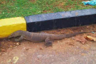 Anuradhapura (63)