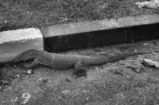 Anuradhapura (64)