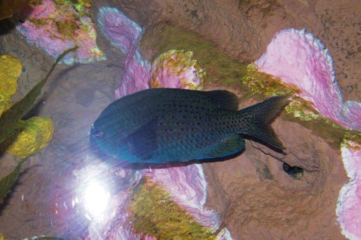 Aquarium of the Bay (1)