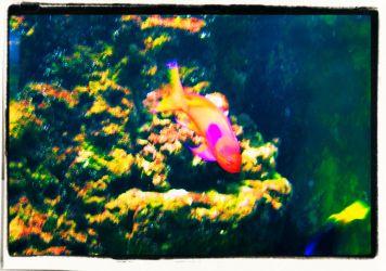 Aquarium of the Bay (10)