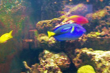 Aquarium of the Bay (11)