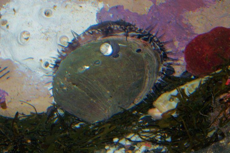 Aquarium of the Bay (13)