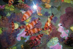 Aquarium of the Bay (14)