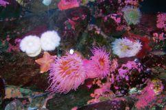 Aquarium of the Bay (17)