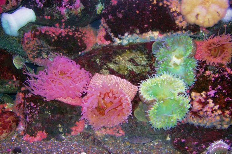 Aquarium of the Bay (18)