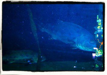 Aquarium of the Bay (21)