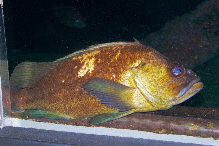 Aquarium of the Bay (22)