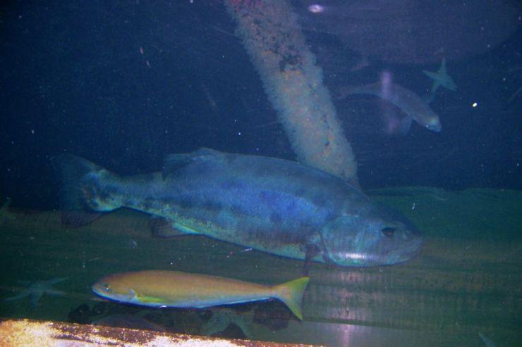 Aquarium of the Bay (25)