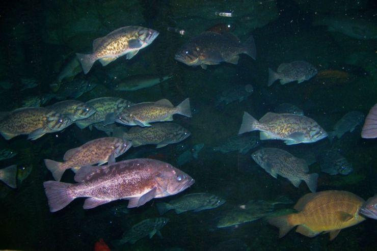 Aquarium of the Bay (26)