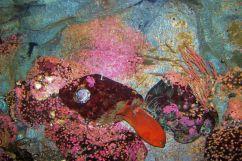 Aquarium of the Bay (28)