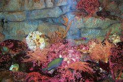 Aquarium of the Bay (29)