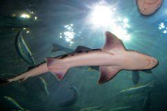 Aquarium of the Bay (35)