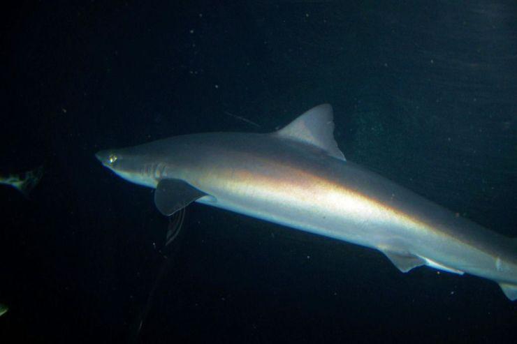 Aquarium of the Bay (36)