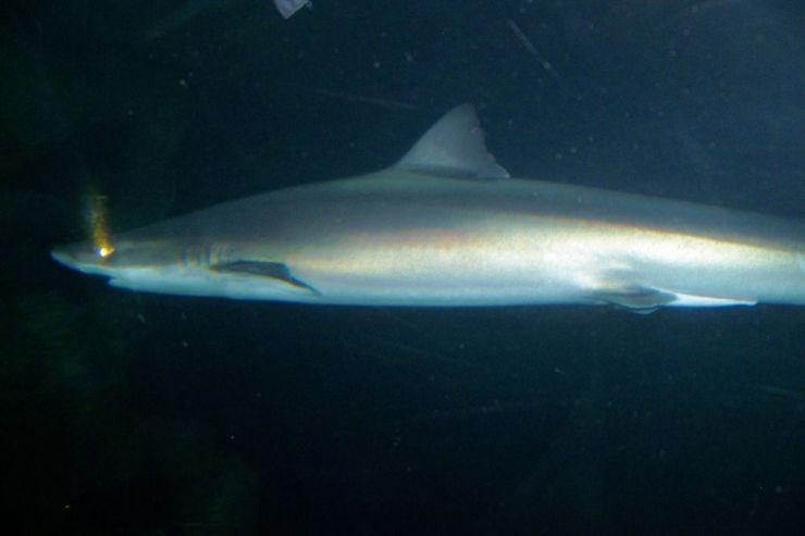 Aquarium of the Bay (38)