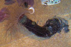 Aquarium of the Bay (4)