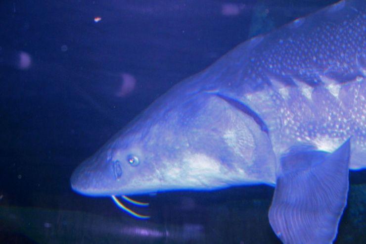 Aquarium of the Bay (43)