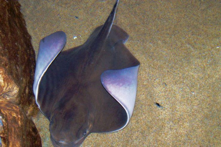 Aquarium of the Bay (50)