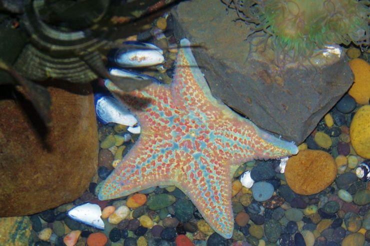 Aquarium of the Bay (51)