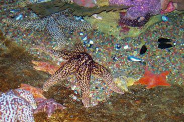 Aquarium of the Bay (55)