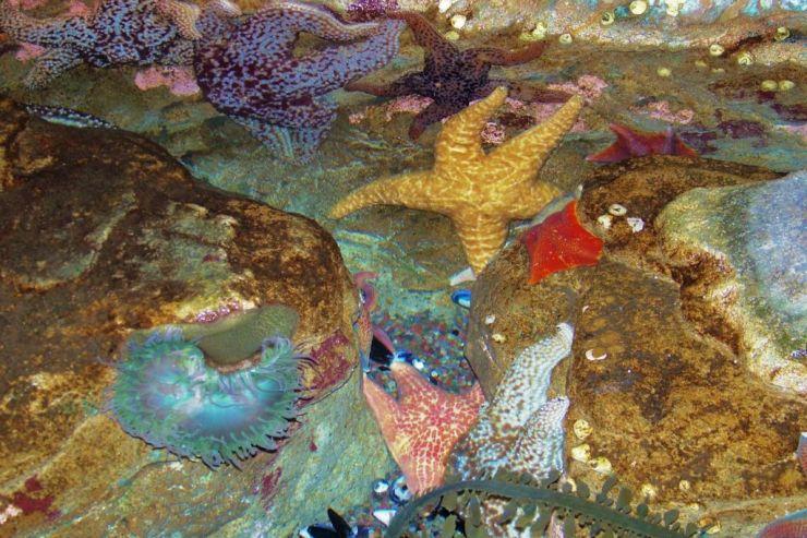 Aquarium of the Bay (56)