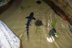 Aquarium of the Bay (57)