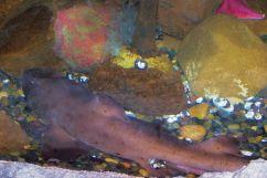 Aquarium of the Bay (58)