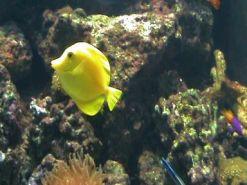 Aquarium of the Bay (59)