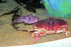 Aquarium of the Bay (6)