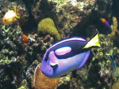 Aquarium of the Bay (61)
