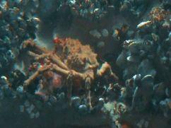 Aquarium of the Bay (63)